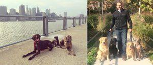 Brooklyn Dog Trainer Bijan