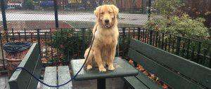 Brooklyn Dog Training