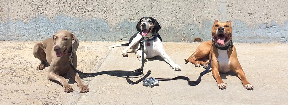 B&B Dogworks brooklyn dog training slide1
