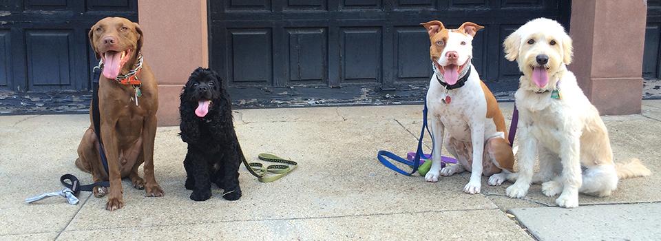 B&B Dogworks brooklyn dog training slide2