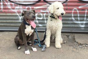 doggyfriends